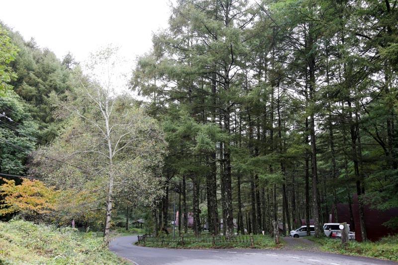 ペットも泊まれる森の小さなリゾート村 桜清水コテージ(風景)