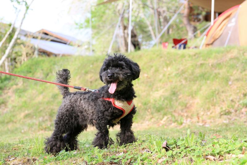 キャンプ場情報・信州まるべりーオートキャンプ場・ペット・犬