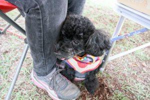 上田市市民の森キャンプ場での愛犬・ワンコ